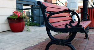 Image of Empty Bench with Flower Next to It